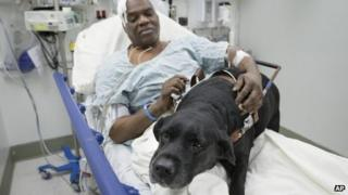 Cecil Williams pets his guide dog Orlando in his hospital bed following a fall onto subway tracks from the platform 17 December 2013