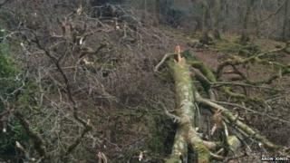 Storm damage at farm near Llanbedr, Gwynedd