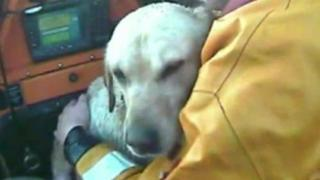 Dog being rescued by lifeboat crew