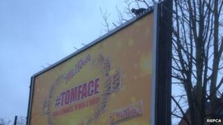Cat stuck on top of billboard