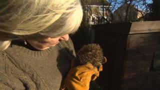 Josephine Jean Thorpe with a rescued badger
