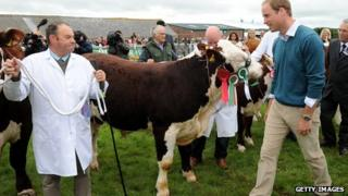 Prince William looks at cattle during his visit to the Anglesey agricultural show in August 2013