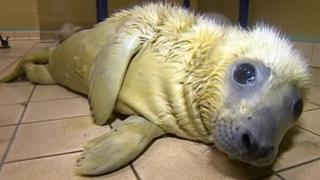 Storm surge seal at RSPCA East Winch