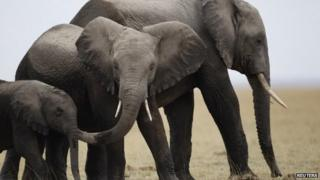 Elephants in East Africa - October 2013