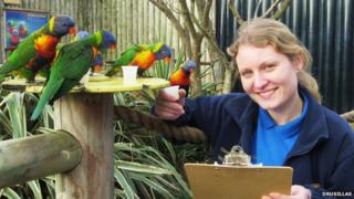 Counting the rainbow lorikeets