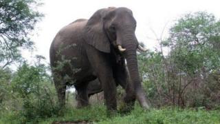 An elephant in Kruger National Park, November 2007