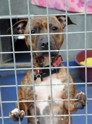 Dog at Wood Green shelter