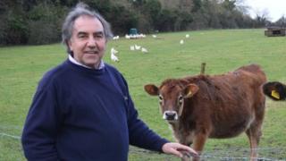 Nick Snelgar and his cows