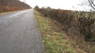 Horse crash scene