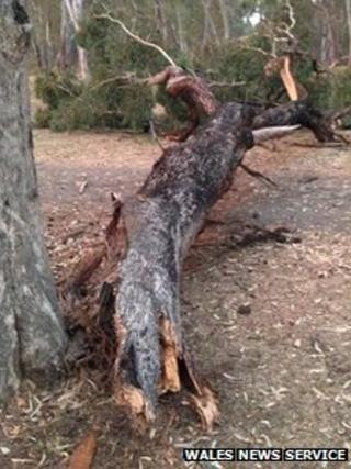 Tree crashed at campsite in Victoria