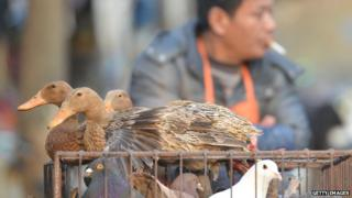 Ducks at poultry market