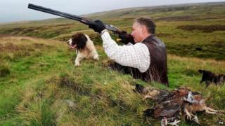 Man shooting grouse