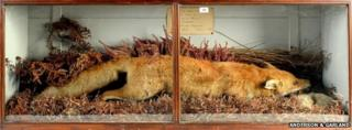 Grayrigg Fox