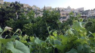 Village of Battir as seen from the agricultural land in the valley