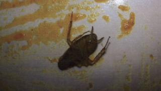 Cockroach found in vindaloo