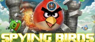 Spying birds image