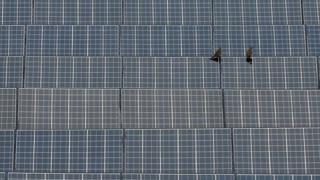 Solar farm (stock image)