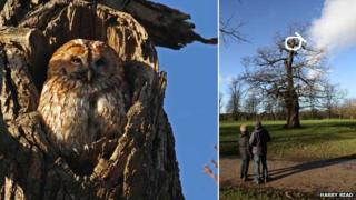 Mabel the tawny owl, Christchurch Park, Ipswich