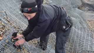 Officer rescuing a trapped razorbill