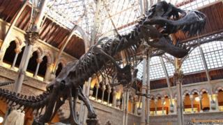 T-Rex exhibit at OUMNH
