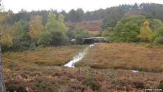 Wareham Forest