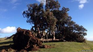 Lonely tree, Llanfyllin