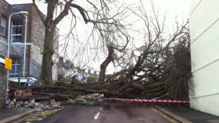 Fallen tree, Hyde Park, Plymouth, 15 Feb
