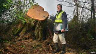 Senior tree officer Bryan Wilson from the New Forest National Park Authority