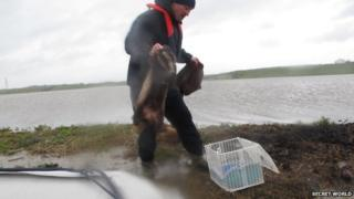 Badgers rescued from flood water