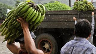Man unloading bananas from a truck