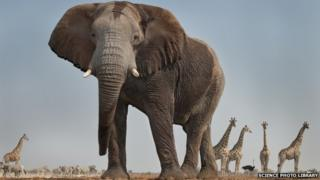 An elephant in Etosha National Park, Namibia