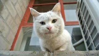 A cat in Beijing's Forbidden City