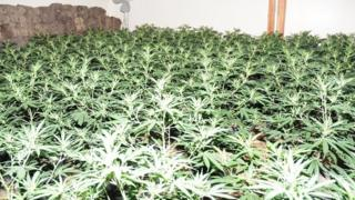 More than 1,000 plants were found at the bunker