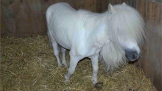 RSPCA pony