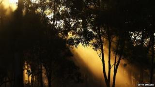 Australian scrubland