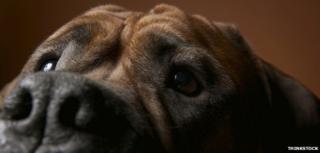 A dog's nose