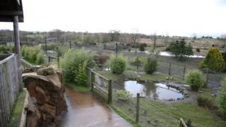 View of Blackbrook Zoo