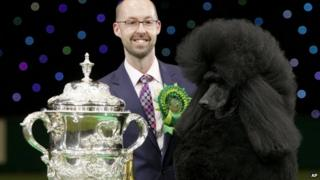 Two-year-old standard poodle Ricky with his handler Jason Lynn after winning Best In Show at the Crufts dog show in Birmingham