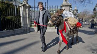 Igor Matovic arrives at the government office with a donkey loaded with potatoes