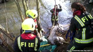 Horse rescued from river