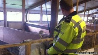 Mystery emu with PC Gary Young at the animal shelter