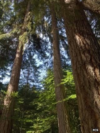 Trees in Reelig Glen