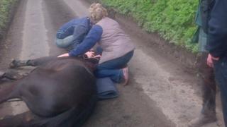 Horse lying in road