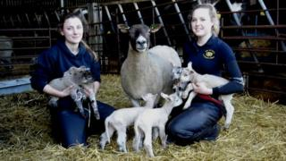 Vet students Sophie Brown (left) and Hannah Johnstone with the sextuplet lambs at Colesmoor Farm in Toller Porcorum, Dorset