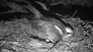 Lady laying egg