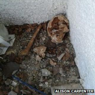 image of the bones found