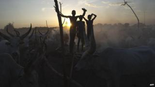 South Sudanese cattle herders stand among their animals in a field in the Central Equatoria state (13 April 2014)