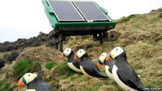 Fibreglass puffins and the solar-powered sound system