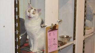 GSPCA cattery, Guernsey