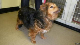 The dog, named Lara, found abandoned in Oxford